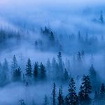 Yosemite Misty Tree.jpg