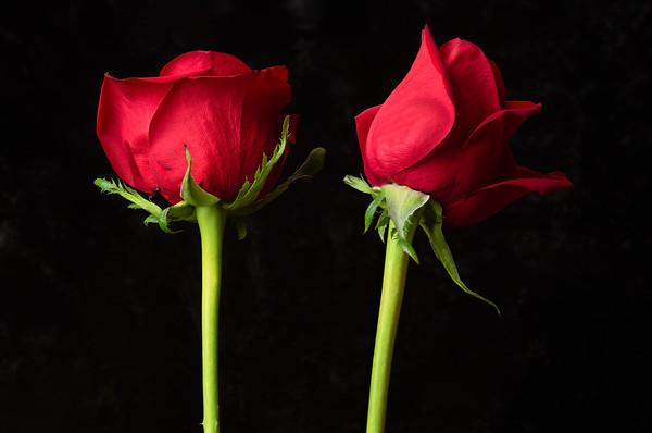 2019-05-02 Ridvan roses