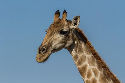 Namibia Mammals 2