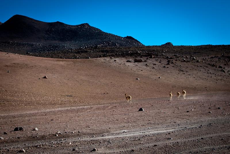 Tupiza to Uyuni 20120529 (224).jpg