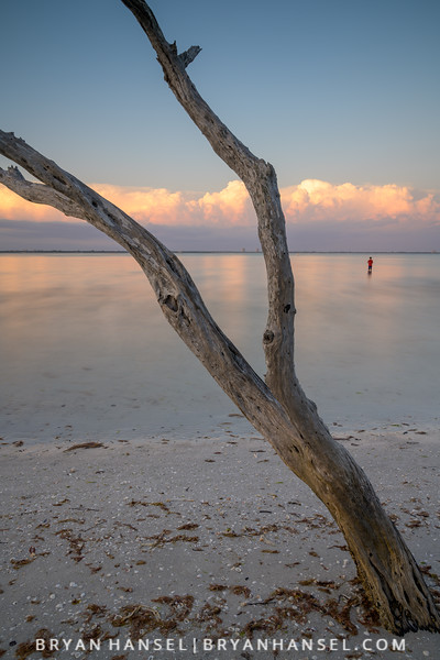 Sanibel Driftwood 7