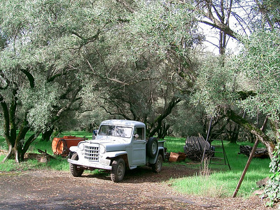 Sue's Willys in Oroville