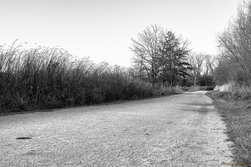 Low Path