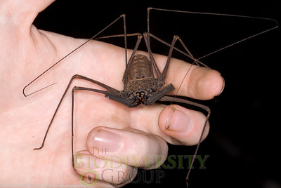 Arachnids: Other