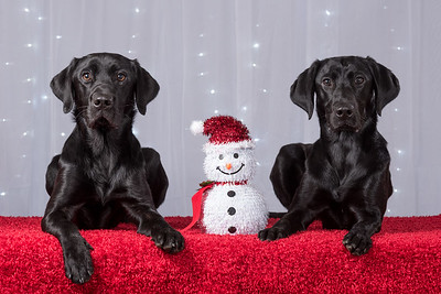 12-03-2016 Sibling Christmas Pet Photo Shoot