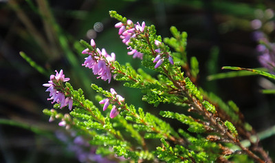 Nature  - Close up