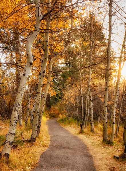 Aspen Path vertical_DSC1448.jpg