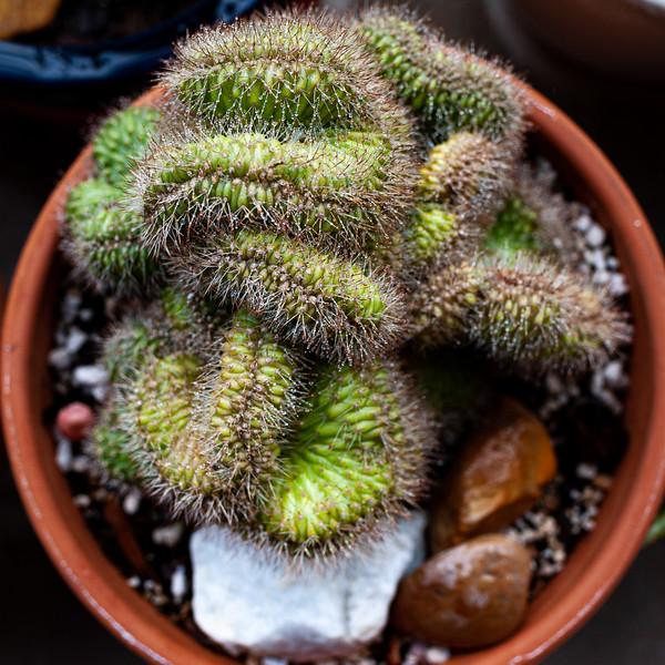 cactus 050320-2924.jpg