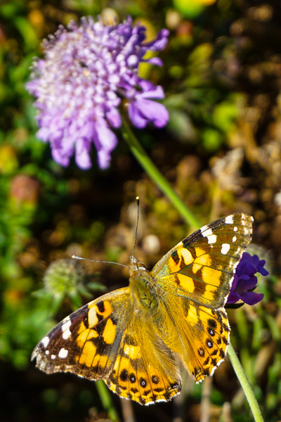 Butterflies 10-7-17 (4 of 4).jpg