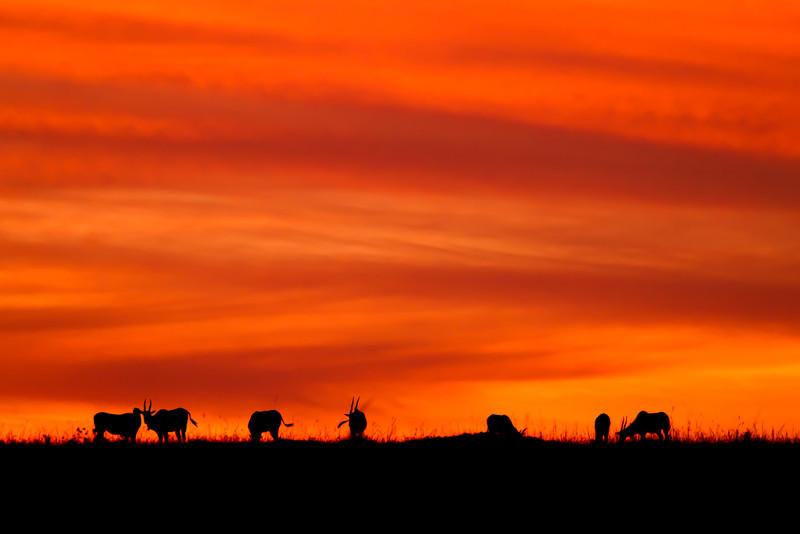 Sunrise on The Mara