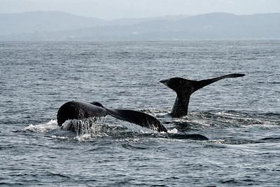 Whale Watching - Monterey, CA