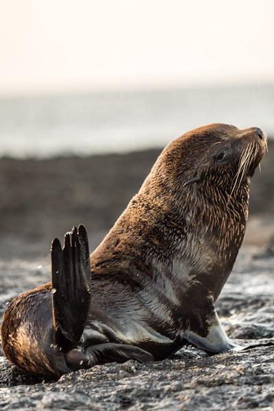 Galapagos-Best-096.jpg