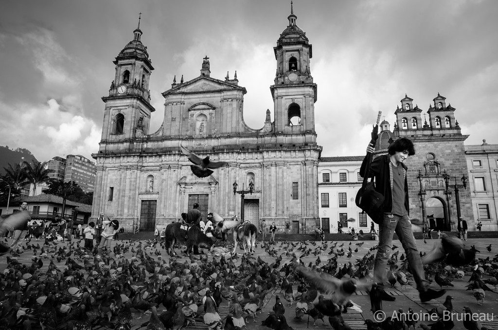 Pigeon Invasion, Bogota, Colombia.  Located in the heart of the historical district of Bogotá, capital of Colombia, thousands of pigeons live at the Plaza de Bolívar, the main square of the city where stands the biggest Cathedral of the country and one of the biggest ones in South America.