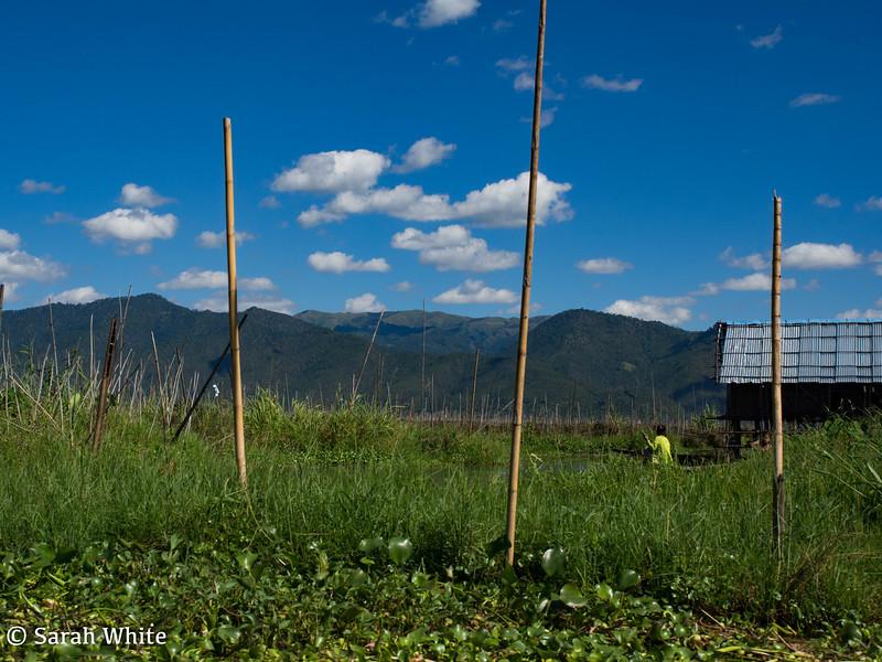 Inle Lake_161115_020.jpg