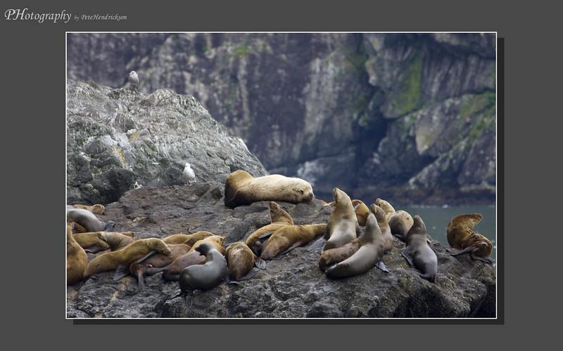 My Alaska 12-08-094.jpg