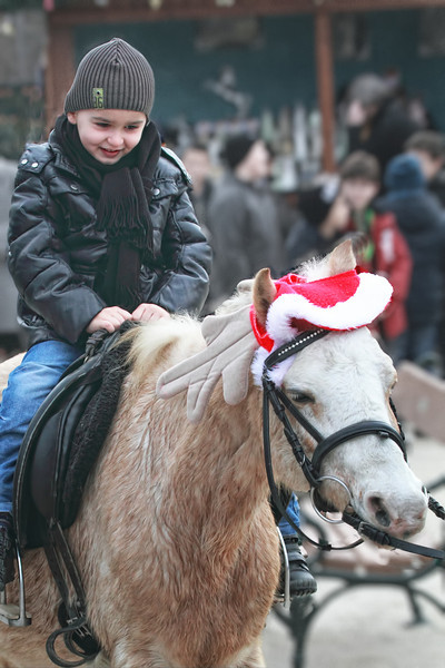 Laid back antlers on the pony ride at an Advent Market in Vienna.