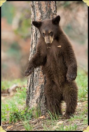 Momma & Three Baby Bears