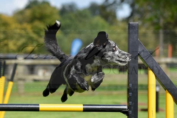 Nikon - The Art of Dog Photography