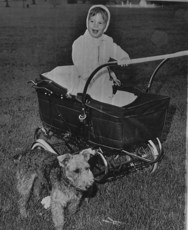 . John Jr., son of President and Mrs. Kennedy, stands gleefully in his carriage on the south grounds of the White House as his dog, Charlie, stands in the foreground in 1962. Associated Press file