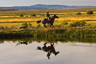 Oregon Horses 1