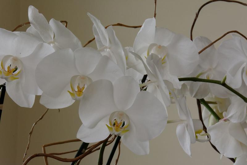 Orchid (1).jpg