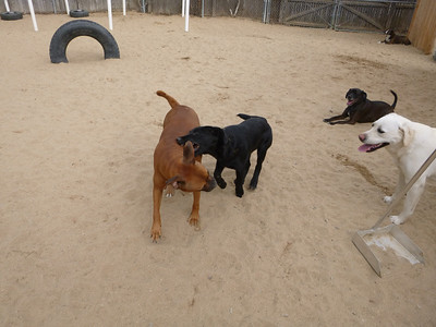All Dogs Gym 04-19-2013