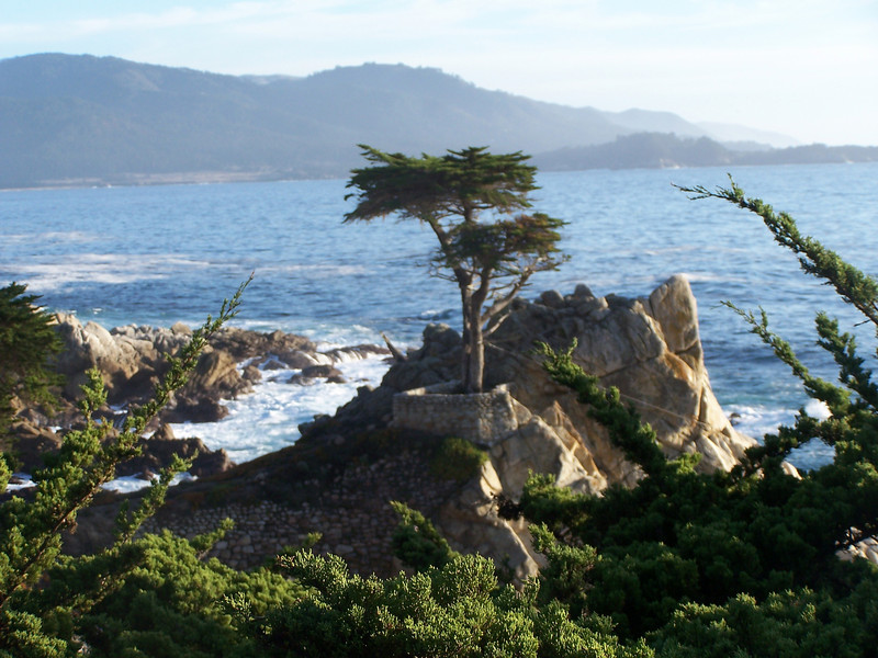 Lone Cypress, gem of the Seventeen Mile Drive.