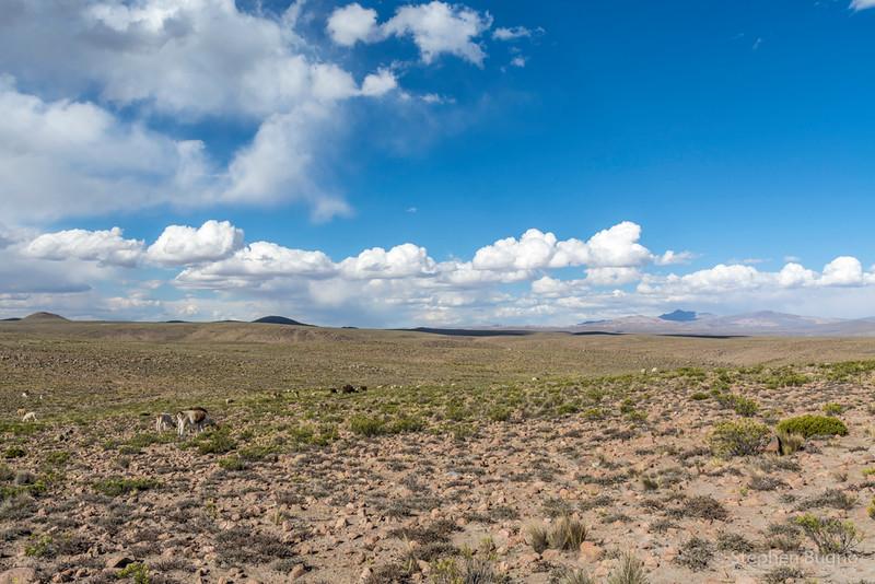 Colca Canyon-1441.jpg