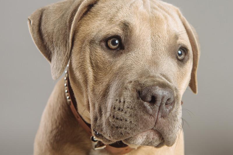 badap-puppies-18.jpg