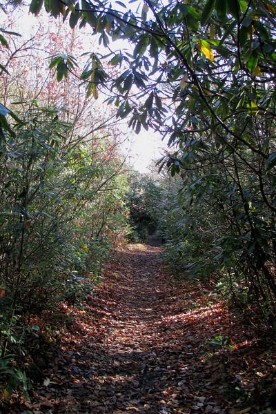Panthertown Valley Trail - 3,720'