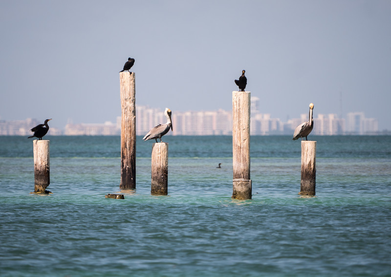 Everyone has a pelican in Miami