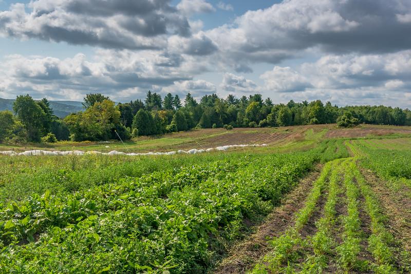 Bear Roots Farm - Barre