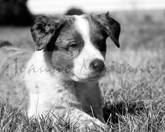 Betsy Crenshaw-New Pup