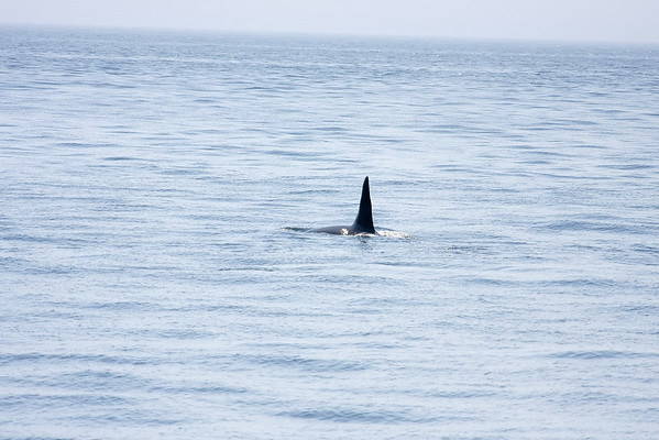 Whale Watching - 2011