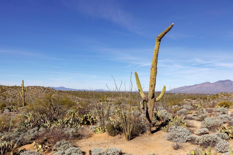 A Very Derpy Cactus