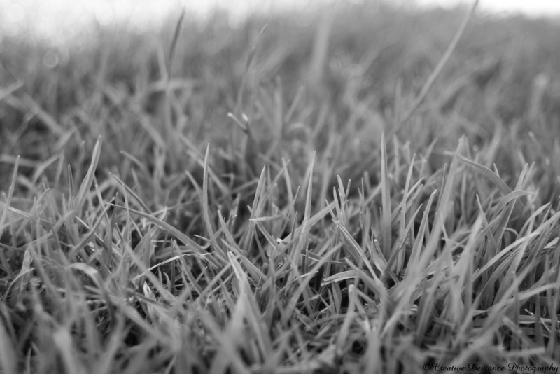 June 7, 2009  Sometimes, grass is just grass. Shot in the Monochrome setting straight from camera.