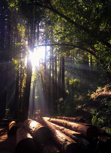 redwood sun.jpg
