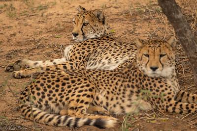 Namibia - Etosha