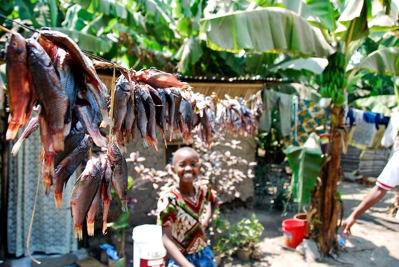 Drying the Tilapia, Tanzania