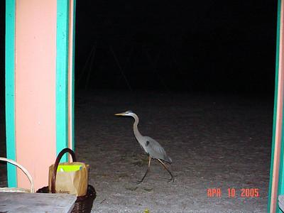2005 Sarasota Walk Photos