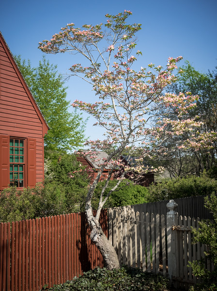 Red House, Blue Sky and Blooming Dogwood Tree