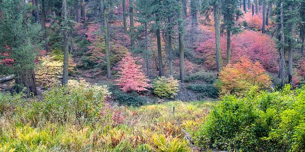 Sequoia (2020-10-18)