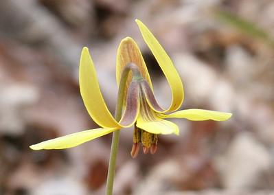 Wildflowers of South Carolina