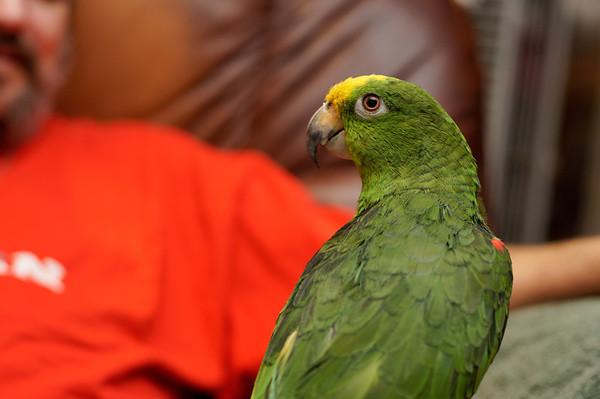 Birds - January 2012