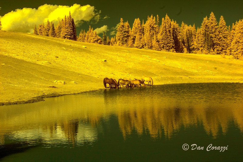 Horses watering IRaa-3aab.jpg