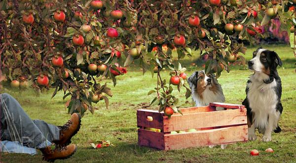 Appleseed.GaWy3_650x360.jpg
