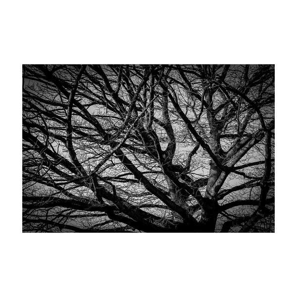 26_365_Tree_10x10in.jpg