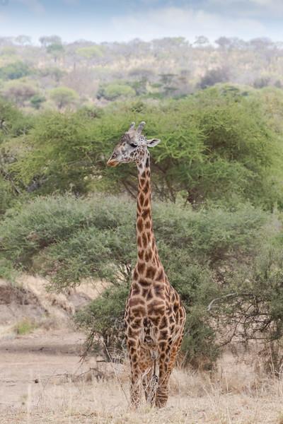 Africa - 102116 - 8272.jpg