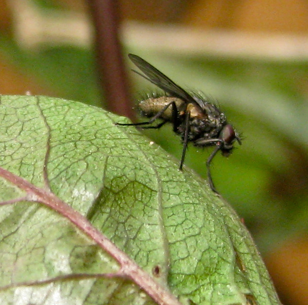 Fly, Burghfield Common