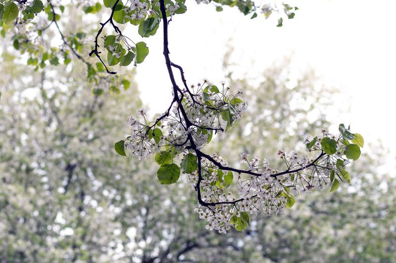 divisiontrees003.jpg